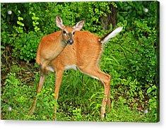 Doe A Deer Acrylic Print by Karol Livote