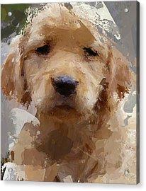 Dog 1 Acrylic Print by Yury Malkov