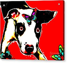 Acrylic Print featuring the painting Dog And Butterfly by Jann Paxton