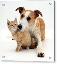 Dog And Kitten Acrylic Print by Jane Burton