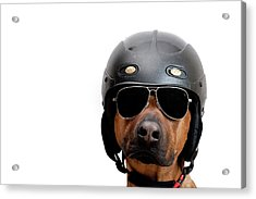 Dog Dressed As Police Man Acrylic Print by Ty Foster