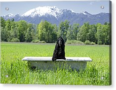 Dog In Bathtub Acrylic Print