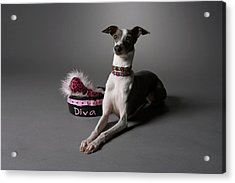 Dog In Sitting Position With Diva Bowl Acrylic Print by Chris Amaral