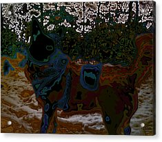 dog in snow - not by Hundertwasser II Acrylic Print by Nafets Nuarb