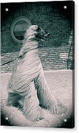 Dog In The Wind.  Acrylic Print by Giancarlo Sherman