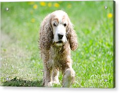 Dog On The Green Field Acrylic Print by Mats Silvan