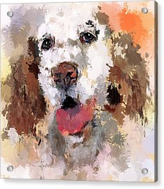 Dog Pet Acrylic Print by Yury Malkov