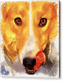 Dog Portrait Acrylic Print by Yury Malkov