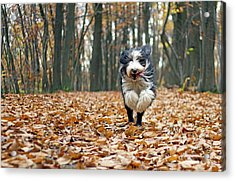 Dog Running In Forest Acrylic Print by Regarder tout autour de soi