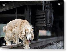 Dog Walking Under A Train Wagon Acrylic Print by Mats Silvan