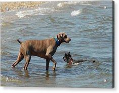 Dogs 21 Acrylic Print by Joyce StJames
