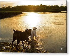 Dogs At Sunset Acrylic Print by Stephanie McDowell