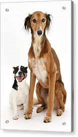 Dogs Acrylic Print by Mark Taylor
