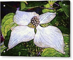 Dogwood Days Acrylic Print by Judi Bagwell