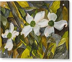 Dogwoods Acrylic Print by Mary Ann King