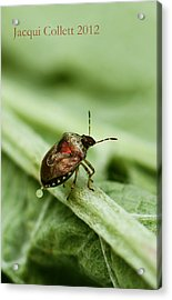 Doing What Comes Naturally Acrylic Print by Jacqui Collett