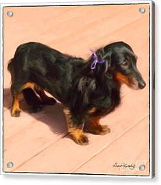 Dolled Up Dachshund Acrylic Print by Susan  Lipschutz