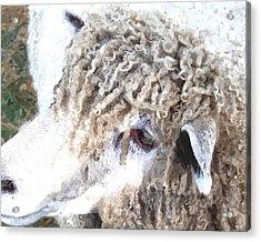 Dolly Dwc Acrylic Print
