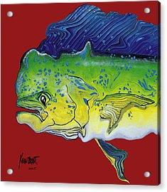 Dolphin Headach Acrylic Print by Kevin Brant