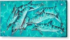 Dolphin Pod Acrylic Print by Daniel Jean-Baptiste
