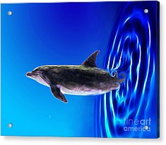 Dolphin Zoom Acrylic Print by Methune Hively