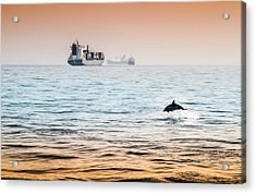 Dolphing Playing In The Sunset Acrylic Print by Stephen McCluskey