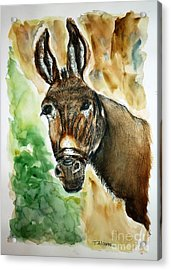 Donkey Acrylic Print by Therese Alcorn