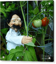 Acrylic Print featuring the photograph Dorf Chef Doll With Tomatoes by Renee Trenholm