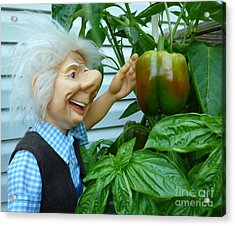 Acrylic Print featuring the photograph Dorf Grandpa Doll Picking Bell Peppers by Renee Trenholm