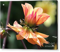 Acrylic Print featuring the photograph Double Floral by Eve Spring
