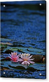 Double Lily Acrylic Print by Karol Livote
