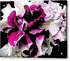Double The Frill Acrylic Print by Yvonne Scott