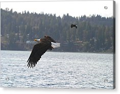 Double Trouble Eagles Acrylic Print by Kym Backland