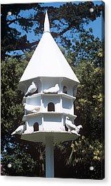 Doves Acrylic Print by Adrian Thomas