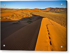 Down Dune Acrylic Print