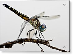 Acrylic Print featuring the photograph Dragon by Dan Wells