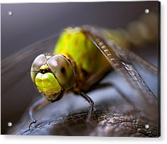 Dragon-fly  Acrylic Print by Anna Rumiantseva