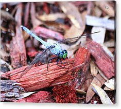 Acrylic Print featuring the photograph Dragon Fly by Jeanne Andrews