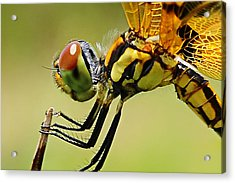 Dragon Fly Acrylic Print by Michelle Armstrong