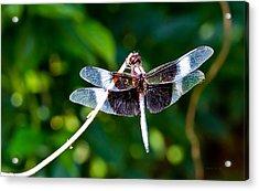 Dragonfly 0002 Acrylic Print by Barry Jones