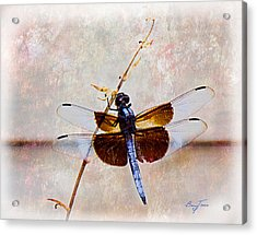 Dragonfly Clinging Acrylic Print by Barry Jones