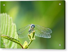 Acrylic Print featuring the photograph Dragonfly Face by Mary McAvoy