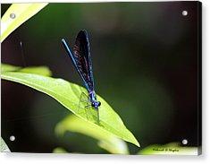Dragonfly Fly Acrylic Print