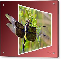 Dragonfly Holding On Acrylic Print by Barry Jones