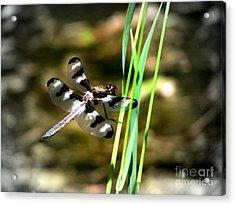 Dragonfly Acrylic Print by Irina Hays