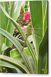 Dragonfly Acrylic Print by Laurie Kidd