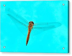 Dragonfly Acrylic Print by Miguel Capelo