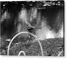 Dragonfly On Rim Acrylic Print