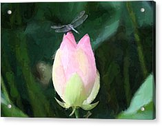 Acrylic Print featuring the photograph Dragonfly On Water Lily by Donna  Smith