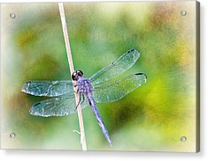 Dragonfly Respite 001 Acrylic Print by Barry Jones
